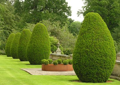 Buxus Ring at Mellerstain